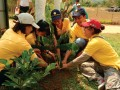 The Permanent Reforestation Project in Celebration of the 50 ... Image 8