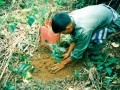 The Permanent Reforestation Project in Celebration of the 50 ... Image 1