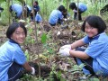 The 4G Give Green Get Green Project Image 7