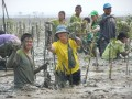 The Mangrove Reforestation and Rehabilitation Project Image 12