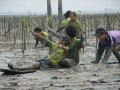 The Mangrove Reforestation and Rehabilitation Project Image 2