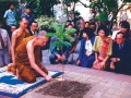 The Temple and Community Collaborative Planting Project in H ... Image 7