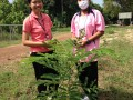 The Thai Literary Botanical Garden Project at Suwannaphumpit ... Image 5